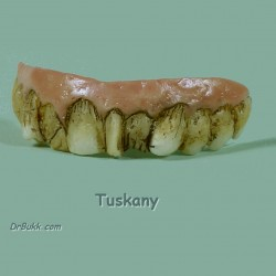 Tuskany Teeth